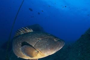 Fish Diving Lavezzi Palau Corsica
