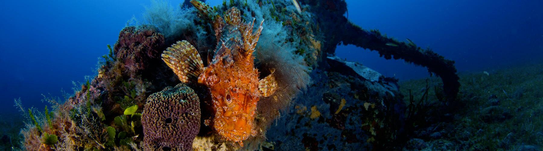 Motore Spagi island Sardinia diving