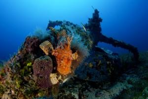 Wreck fishimage spagi Diving Sardegna Italy