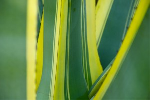 gallery2 plants sardegna