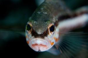 gallery4 Fish Nautilus Diving Palau Sardinia