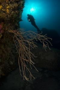 Diver with Nitrox Sardegna Palau